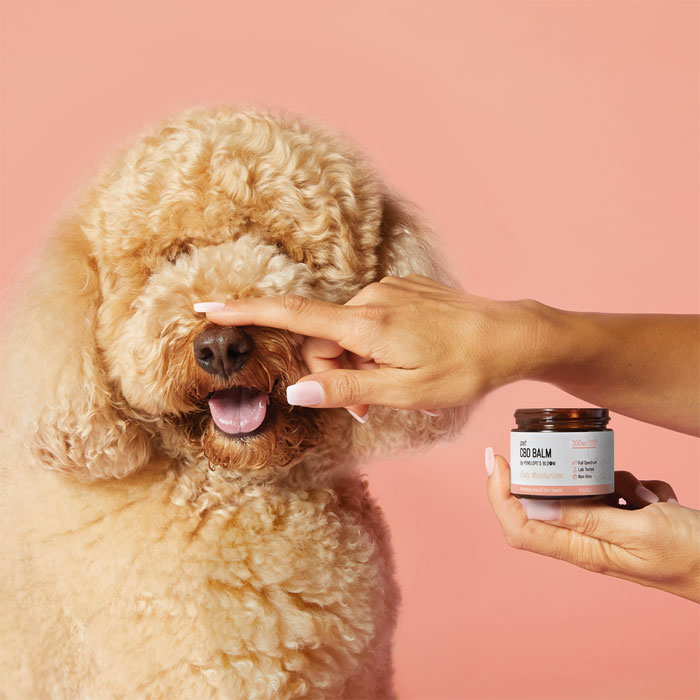 Treating Your Dog with CBD - All You Need To Know About CBD Balm for Pets